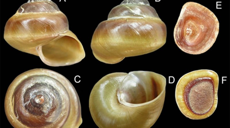 Gastropods_3